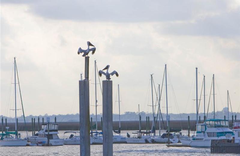 Fishing marina at The King and Prince Beach.