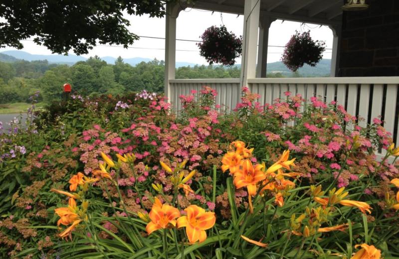 Garden view at Three Stallion Inn.