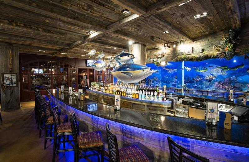 Bar at Big Cypress Lodge.