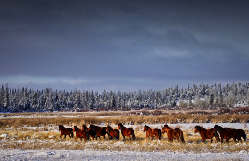 You might see wild horses around Chaunigan