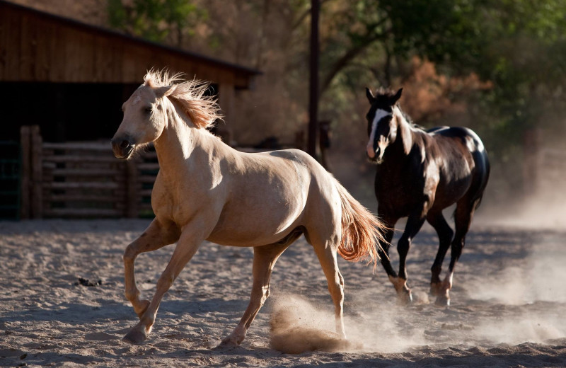 Horses at Red Cliffs Lodge.
