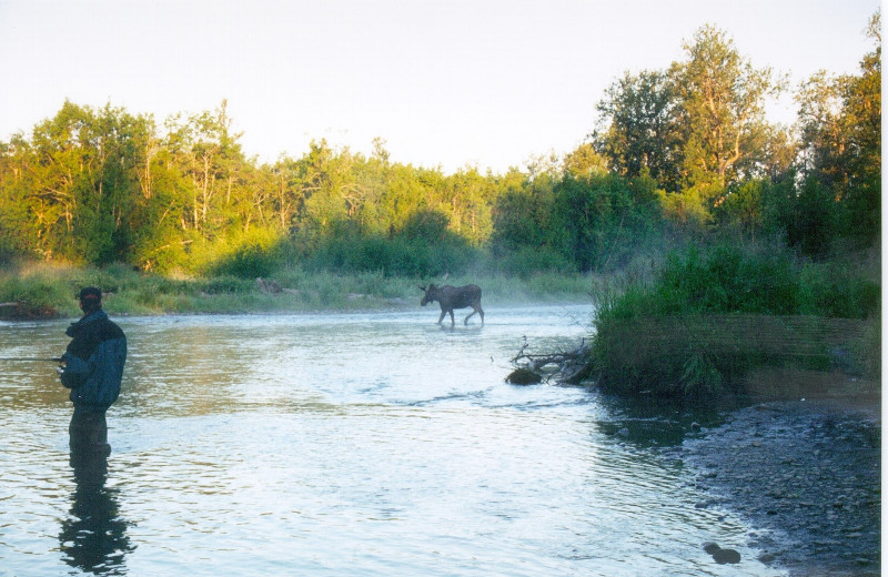 Moose sighting while fishing at Deep Creek Fishing Club.