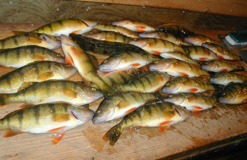 Fish caught at Anchor Inn Resort.