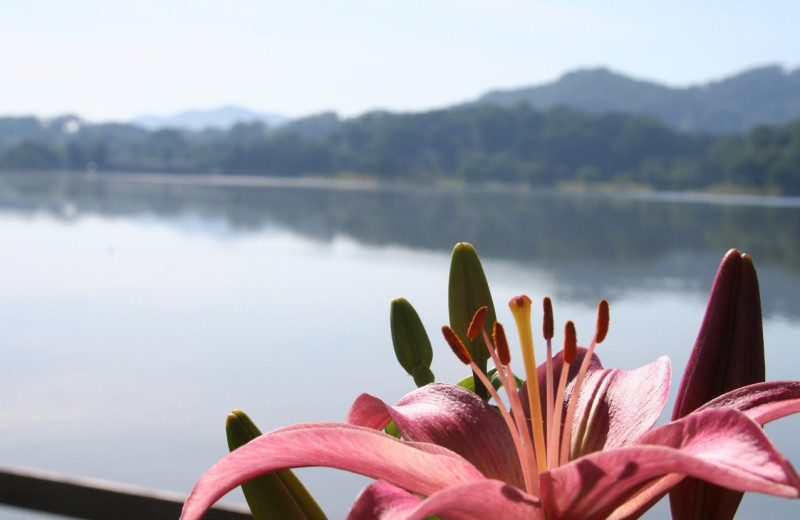 Lake view at Terrace Hotel Lake Junaluska.