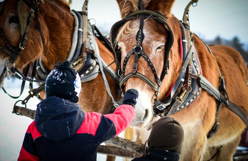 Horses at Woodloch Resort.