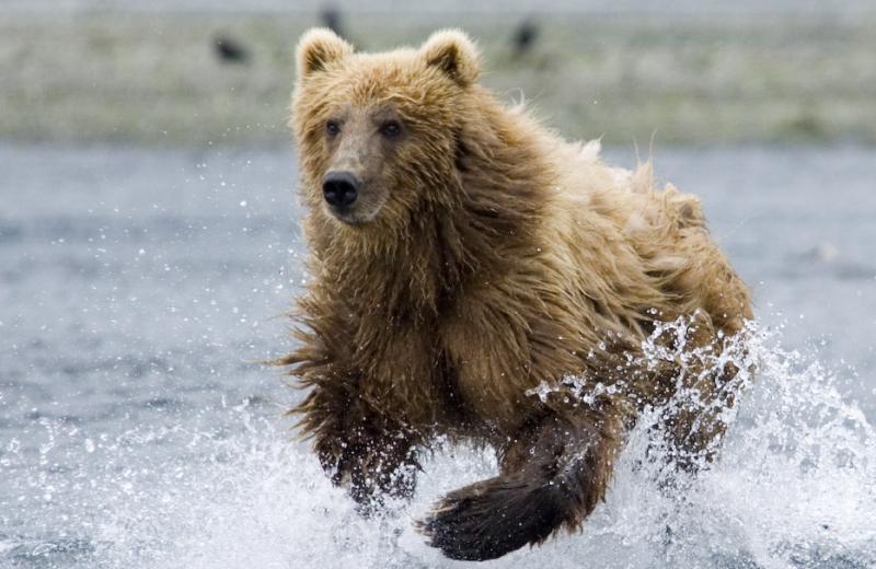 Bears at Munsey's Bear Camp.
