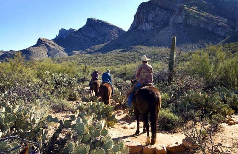 Horseback riding at Hilton Tucson El Conquistador Golf & Tennis Resort.