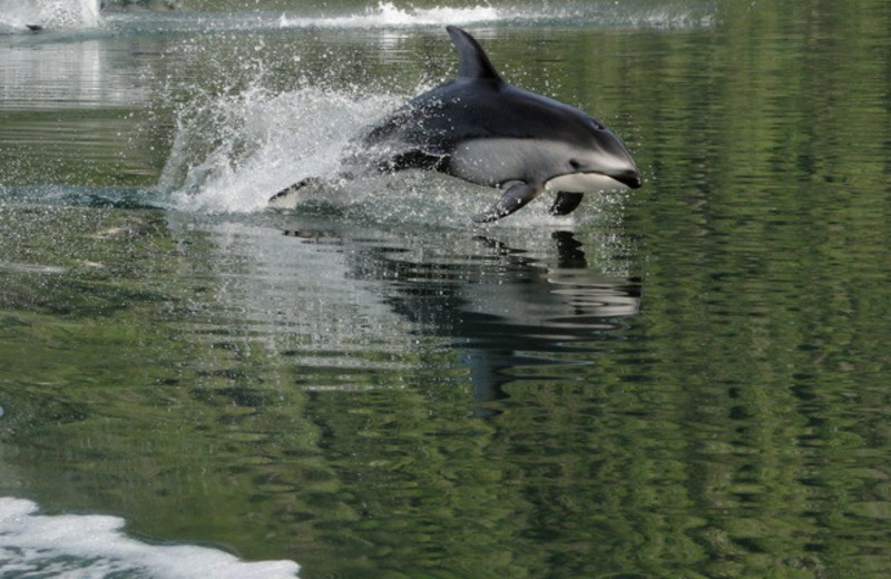 Dolphins at Grizzly Bear Lodge & Safari.