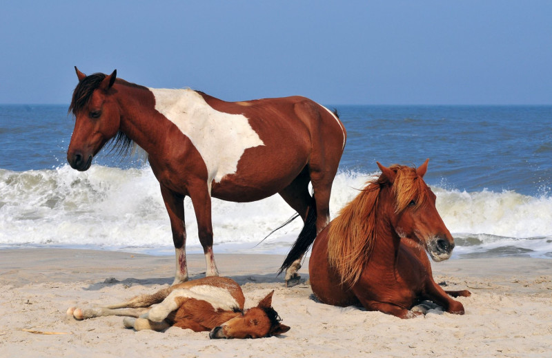Horses on beach at Central Reservations