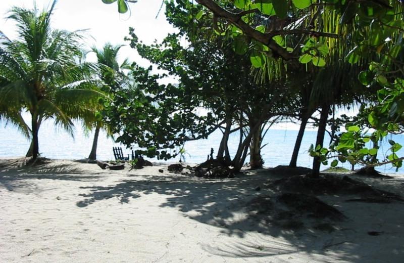 Beach at Blue Crab Beach Resort.