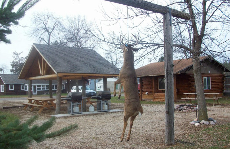 Deer hunting at Ward's Riverside Cabins.