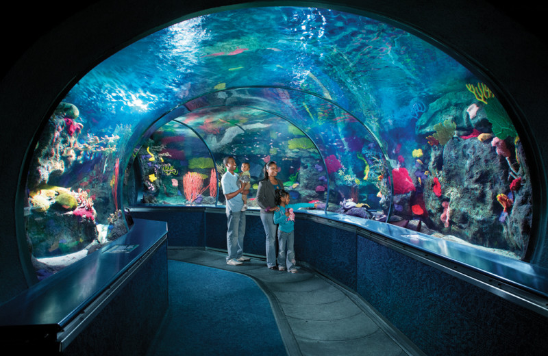 Aquarium near The Strand Resort Myrtle Beach.