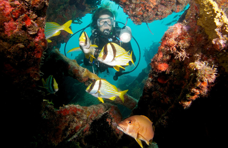 Scuba diving near Coral Bay Resort.