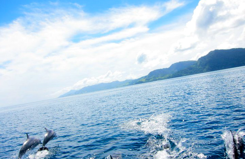Dolphins at Koro Sun Resort
