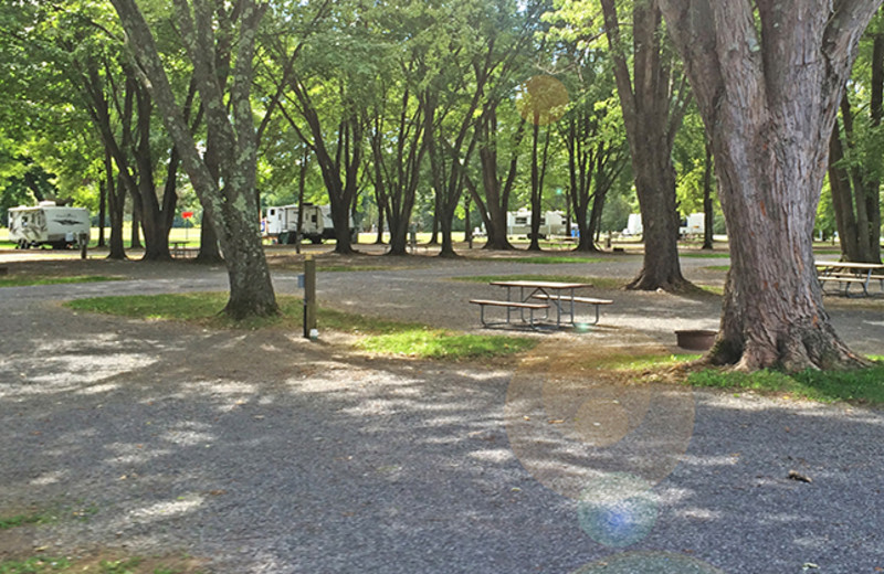 Campsites at Yogi Bear's Jellystone Park Gardiner.