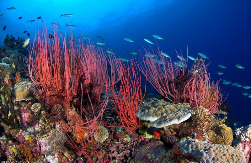 Diving at Tufi Dive Resort.
