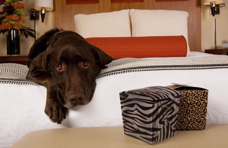 Pet friendly rooms at Hotel Palomar.