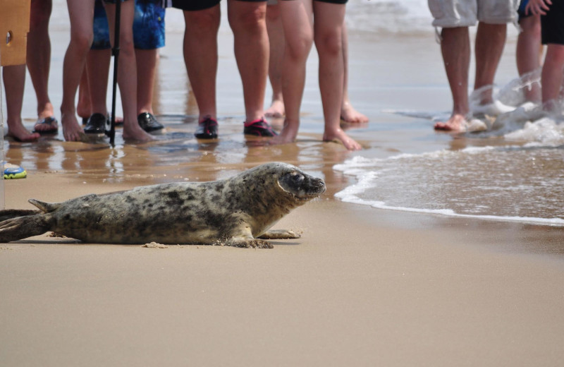 Seal release at CBVacations.com