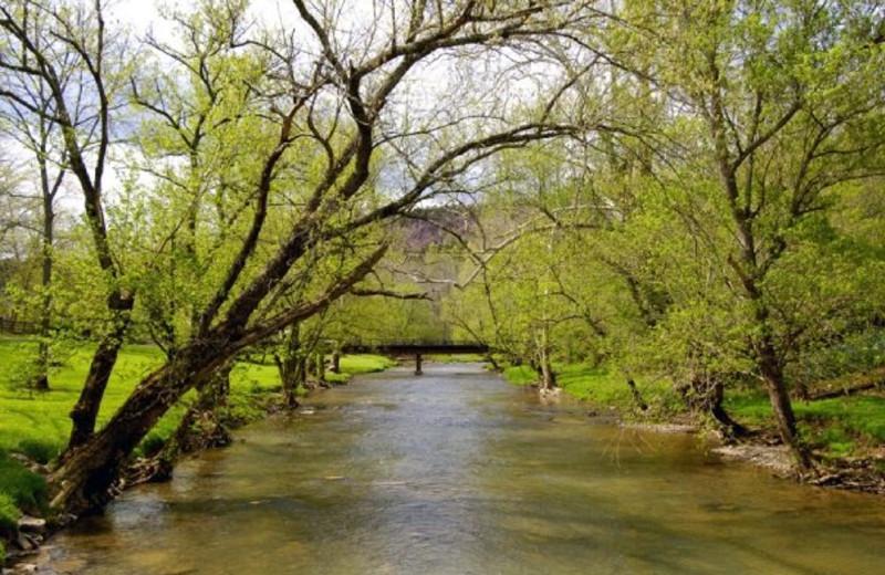 Beautiful creek view at Creekside Resort.