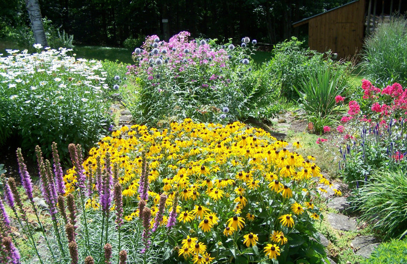 Amazing perennial gardens at Darby Field Inn.
