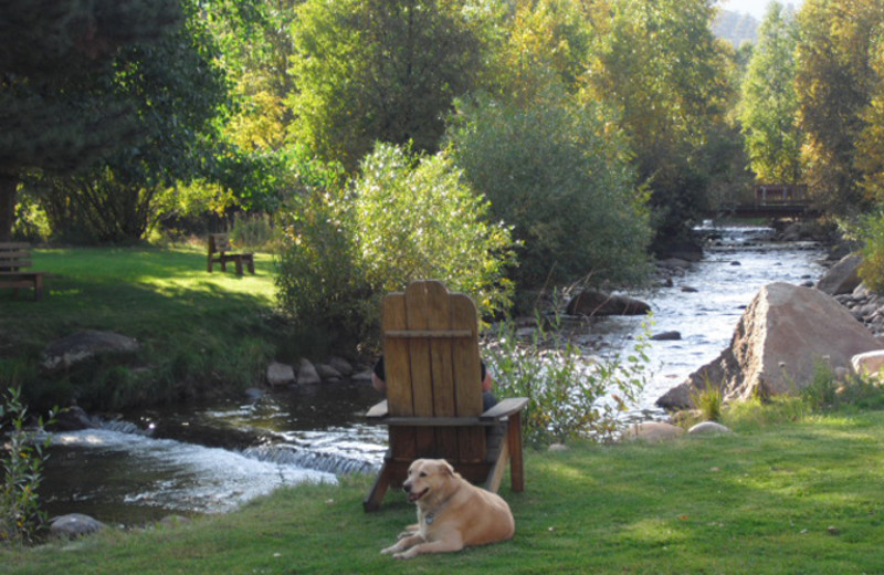 Pets welcome at Riverview Pines.
