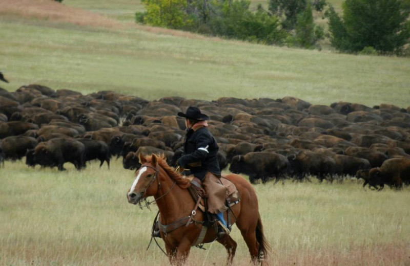 Annual Custer Round up just 30 min. from our cabins