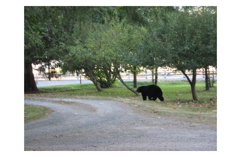 Bear at Grace Haven.