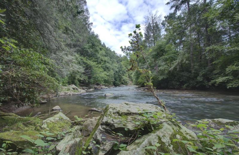 River at Carolina Mornings.