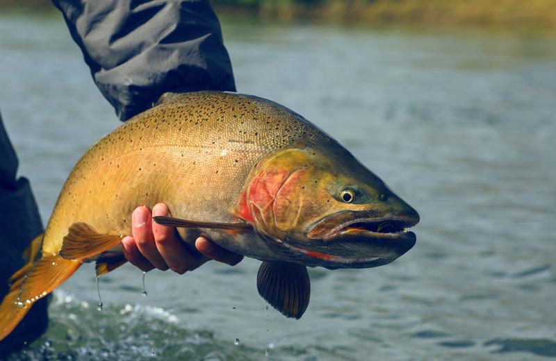 Fishing at Jackson Hole Lodge.