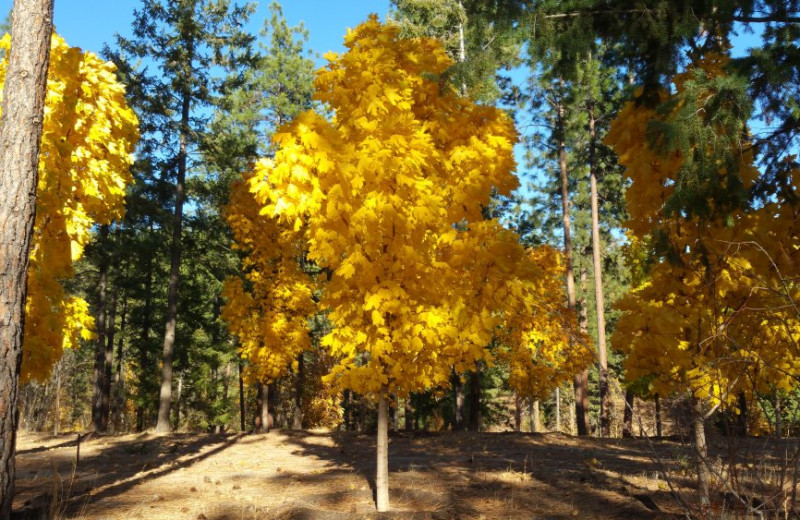 Fall colors at Powers Creek Retreat.
