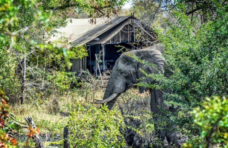 Camp at Honeyguide Tented Safari Camp.