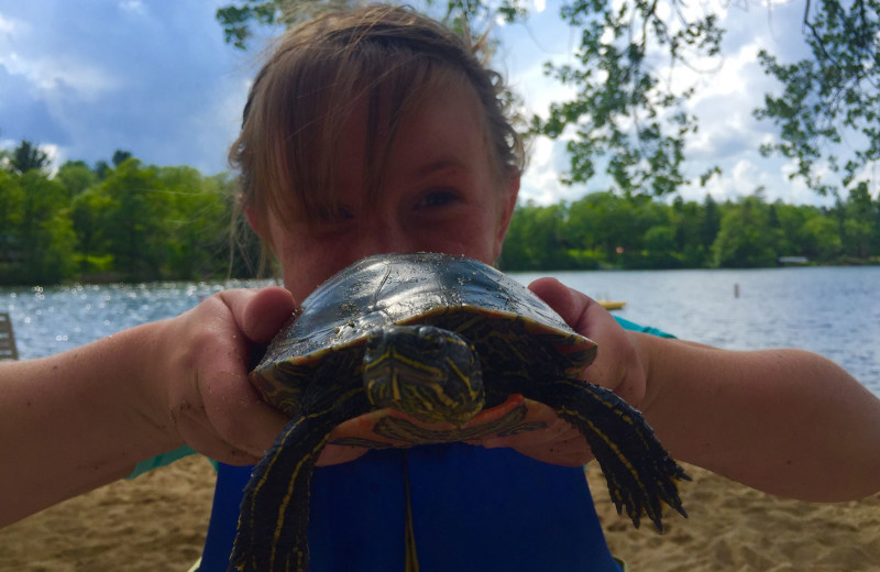 Turtle at Breezy Point Resort on Straight Lake.