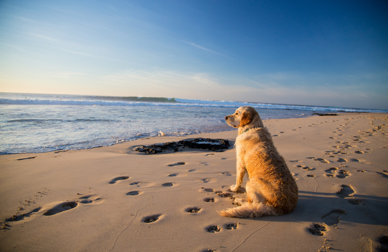 Pets welcome at Sea Star Realty.