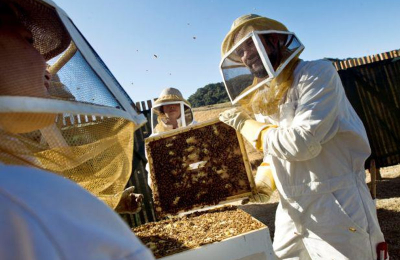 The Bee Experience at Carmel Valley Ranch