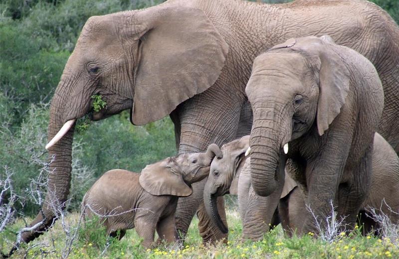Elephants at Amakhala Game Reserve.