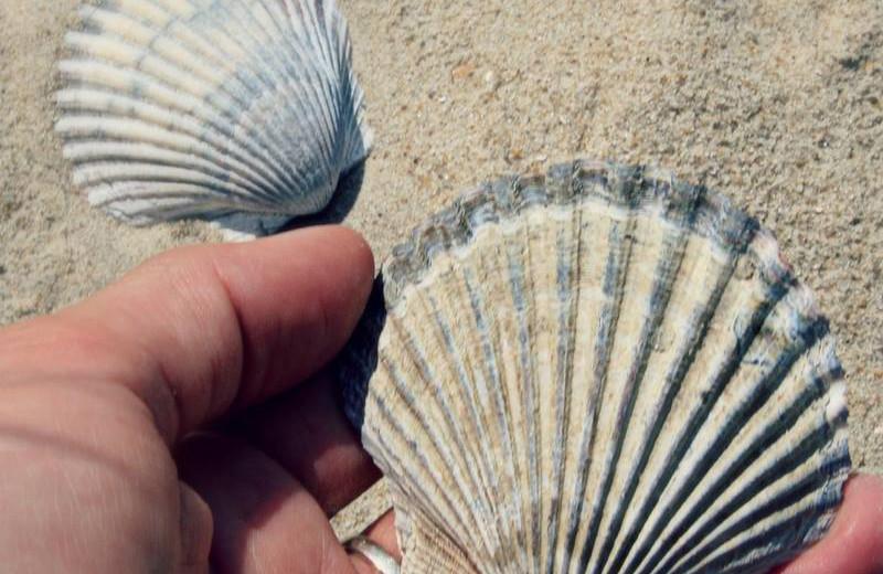Sea shells at Shangri La Motel.