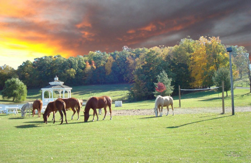 Grounds at Guggisberg Swiss Inn/Amish Country Riding Stables.