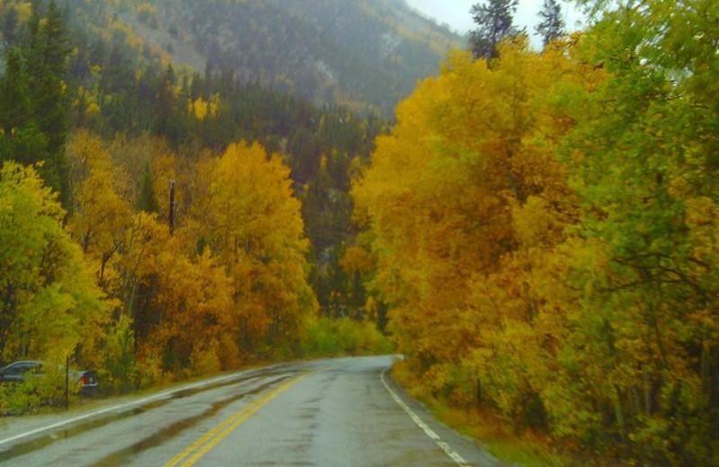 Fall leaves at Colorado Springs KOA.