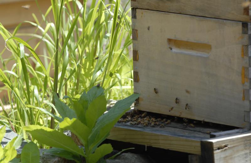 Bees at The Spa at Norwich Inn.