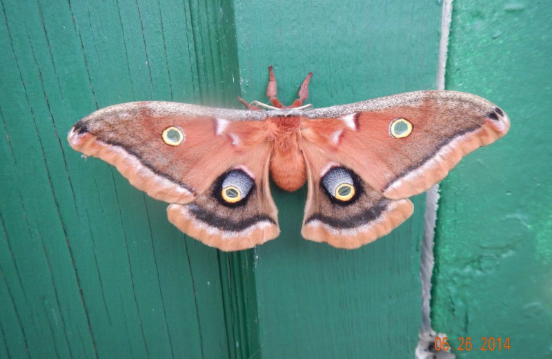 Moth at Rainbow Point Lodge.