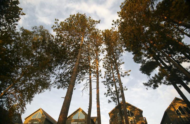 Villas at Giants Ridge Golf and Ski Resort.