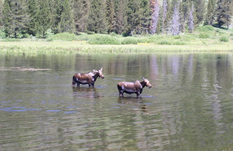 Moose at Madison Management.