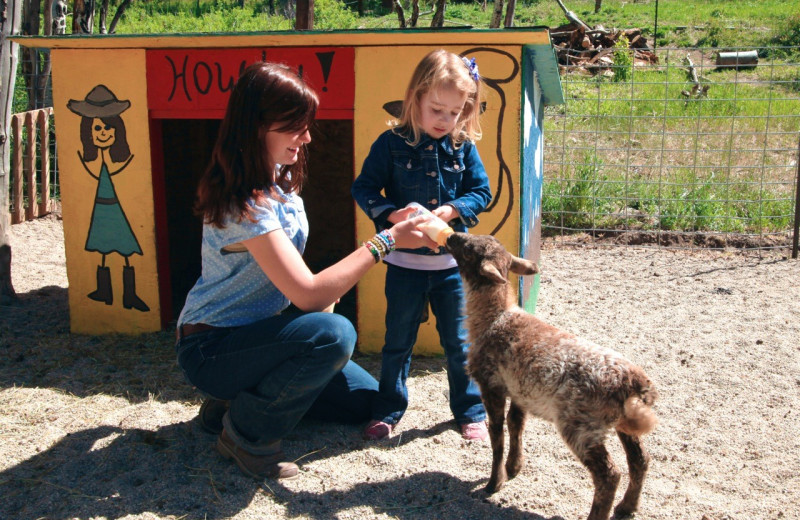 Feeding goat at Elk Mountain Ranch.
