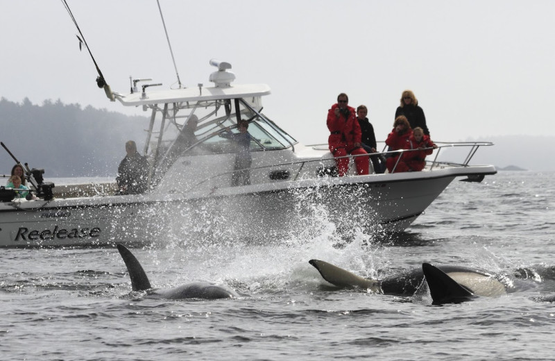 Whale watching at Clayoquot Wilderness Resort.