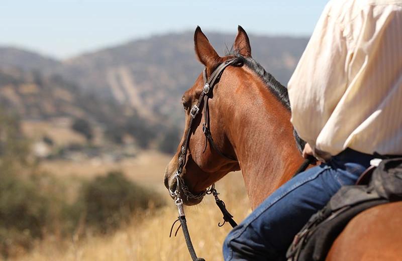 Horseback riding near Big Sky Charter & Fishcamp.