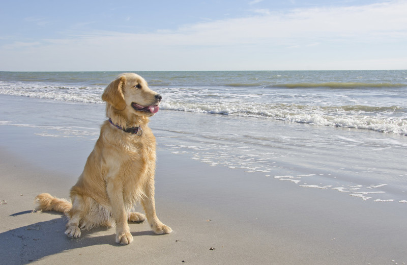 Pets welcome at Jersey Cape Realty.