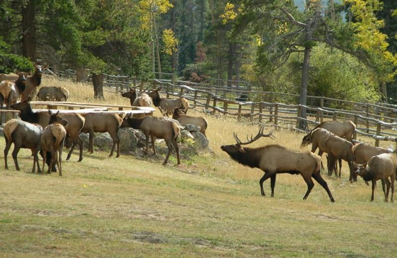 November at Wind River Ranch