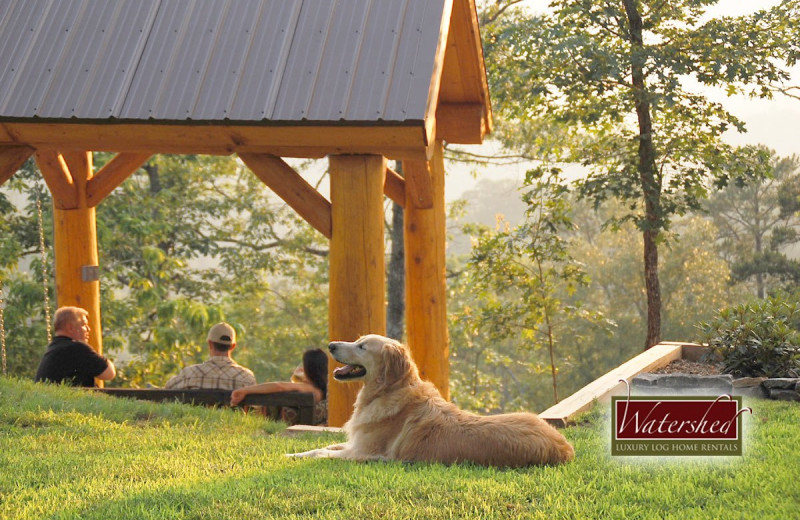 Pet friendly accommodations at Watershed Cabins.