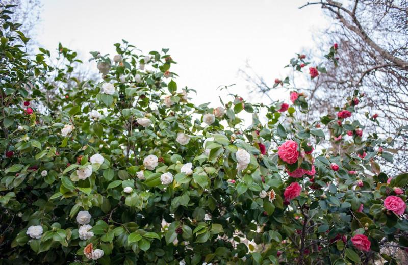Garden at Camellia Inn.