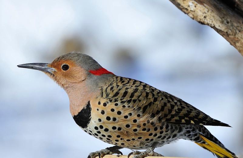 Bird at Wedgewood Resort.